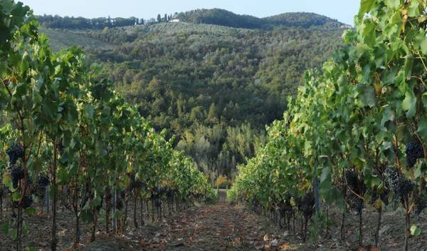 La Querce Vineyard & Olive Groves